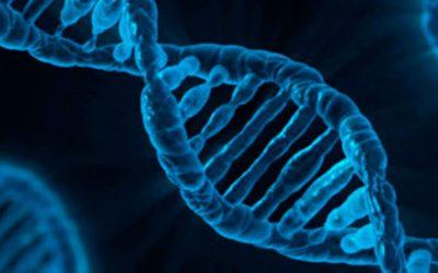Cientistas confirmaram uma nova estrutura de DNA dentro de células humanas